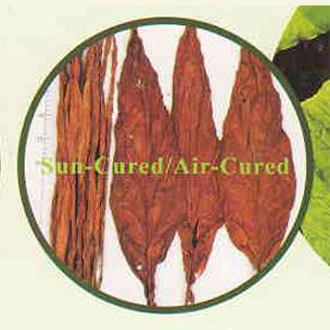 晾晒烟(Air-cured Tobacco)