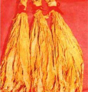 晒黄烟(Sun-cured Tobacco)